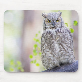 Wyoming, Sublette County, Great Horned Owl 2 Mouse Mat