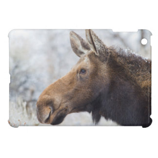 Wyoming, Sublette County, head shot of cow Moose iPad Mini Case