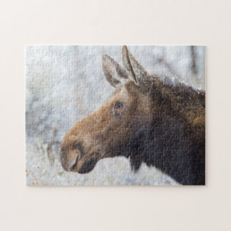 Wyoming, Sublette County, head shot of cow Moose Jigsaw Puzzle