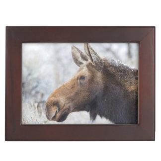 Wyoming, Sublette County, head shot of cow Moose Keepsake Box