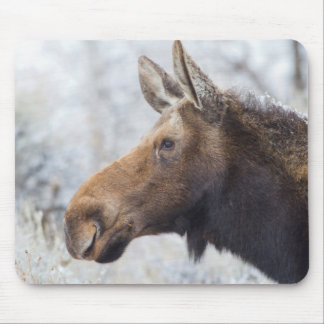 Wyoming, Sublette County, head shot of cow Moose Mouse Mat