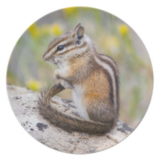 Wyoming, Sublette County, Least Chipmunk Plates