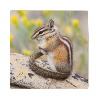 Wyoming, Sublette County, Least Chipmunk Wood Coaster