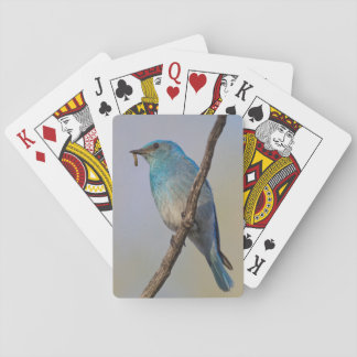Wyoming, Sublette County, Male Mountain Bluebird Poker Deck