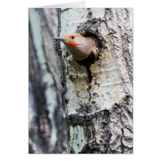 Wyoming, Sublette County, Male Northern Flicker Card