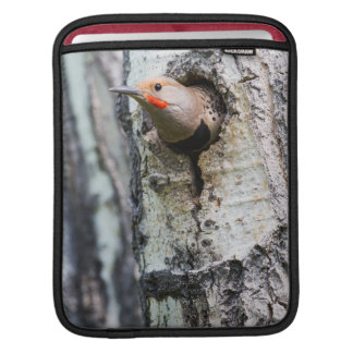 Wyoming, Sublette County, Male Northern Flicker iPad Sleeve