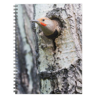 Wyoming, Sublette County, Male Northern Flicker Notebook