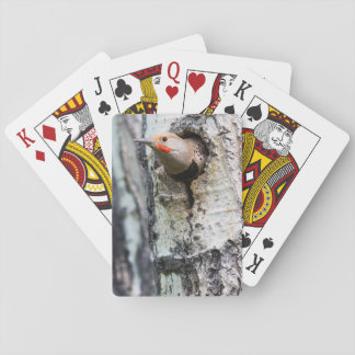 Wyoming, Sublette County, Male Northern Flicker Poker Deck