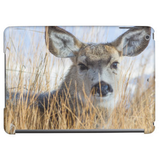 Wyoming, Sublette County, Mule Deer doe resting