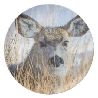 Wyoming, Sublette County, Mule Deer doe resting Plate