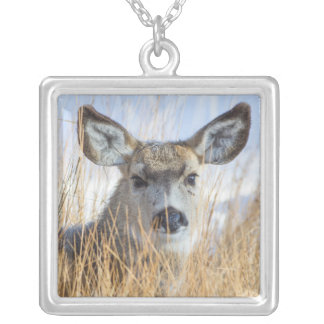 Wyoming, Sublette County, Mule Deer doe resting Silver Plated Necklace