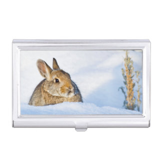 Wyoming, Sublette County, Nuttall's Cottontail 1 Business Card Holder