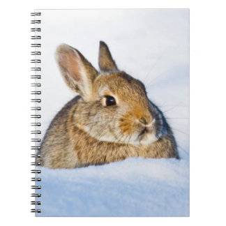 Wyoming, Sublette County, Nuttall's Cottontail 1 Notebook