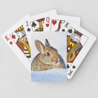 Wyoming, Sublette County, Nuttall's Cottontail 1 Playing Cards