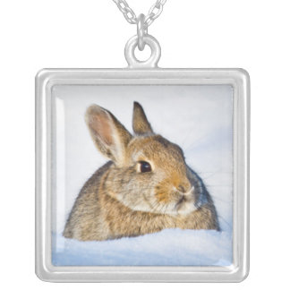 Wyoming, Sublette County, Nuttall's Cottontail 1 Silver Plated Necklace