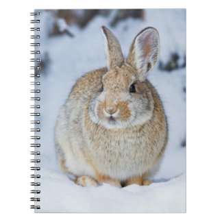 Wyoming, Sublette County, Nuttall's Cottontail 2 Notebooks