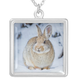 Wyoming, Sublette County, Nuttall's Cottontail 2 Silver Plated Necklace