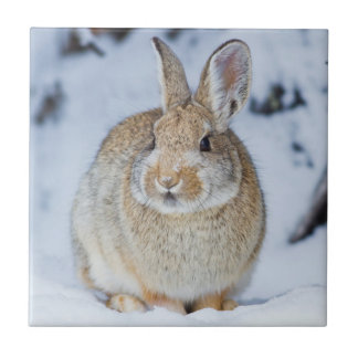 Wyoming, Sublette County, Nuttall's Cottontail 2 Tile