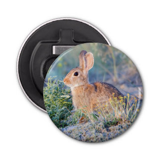 Wyoming, Sublette County, Nuttall's Cottontail 3