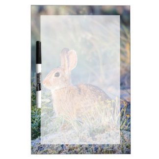 Wyoming, Sublette County, Nuttall's Cottontail 3 Dry Erase Board