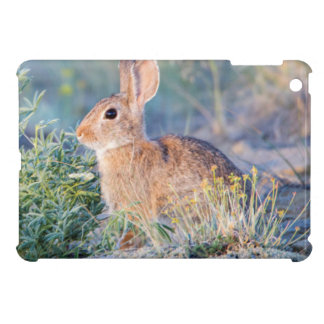Wyoming, Sublette County, Nuttall's Cottontail 3 iPad Mini Cover