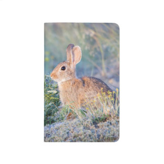 Wyoming, Sublette County, Nuttall's Cottontail 3 Journal