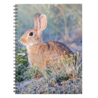 Wyoming, Sublette County, Nuttall's Cottontail 3 Notebook