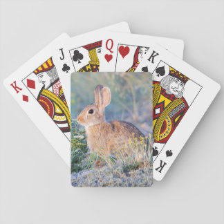 Wyoming, Sublette County, Nuttall's Cottontail 3 Poker Deck