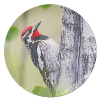 Wyoming, Sublette County, Red-naped Sapsucker Plate