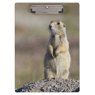 Wyoming, Sublette County, White-tailed Prairie 2 Clipboard