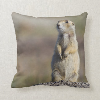 Wyoming, Sublette County, White-tailed Prairie 2 Cushion