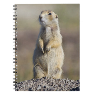 Wyoming, Sublette County, White-tailed Prairie 2 Spiral Notebook