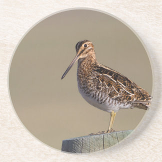 Wyoming, Sublette County, Wilson's Snipe Coaster
