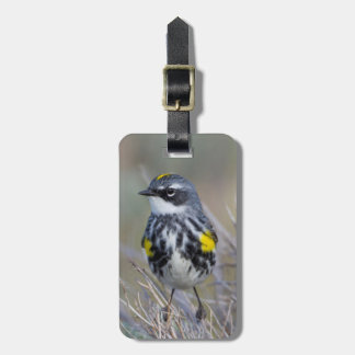 Wyoming, Sublette County, Yellow-rumped Warbler Luggage Tag