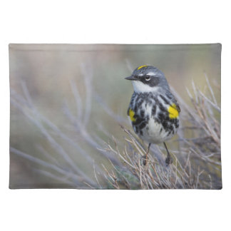 Wyoming, Sublette County, Yellow-rumped Warbler Placemat
