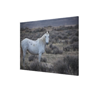 wyoming, united states of america 2 canvas print