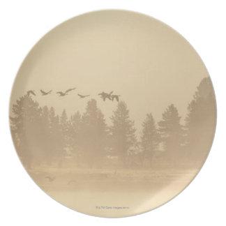 Wyoming, USA Plate