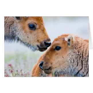 Wyoming, Yellowstone National Park, Bison calves Greeting Card