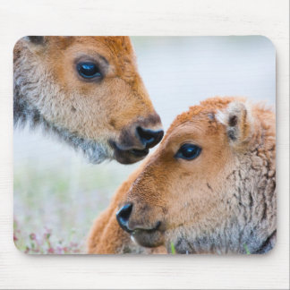 Wyoming, Yellowstone National Park, Bison calves Mouse Mat