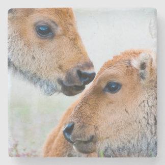 Wyoming, Yellowstone National Park, Bison calves Stone Beverage Coaster