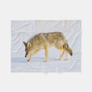 Wyoming, Yellowstone National Park, Coyote Fleece Blanket
