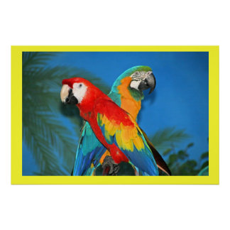 X Marks the Spot Parrots Poster