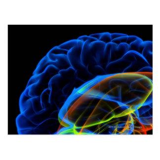 X-ray image of the brain postcard