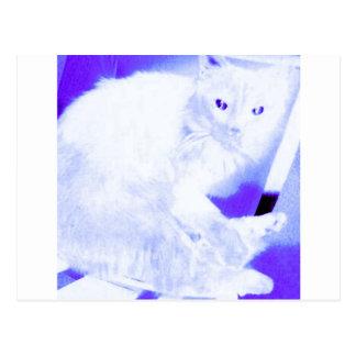 X-ray Kitty Postcard