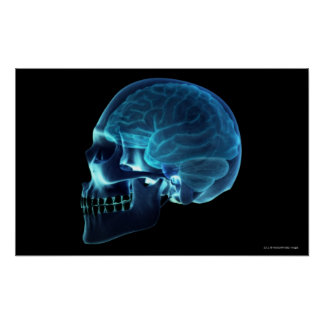 X-ray of the brain inside a skull poster