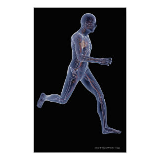 X-ray of the vascular system in a running man poster