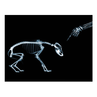 X-Ray Skeletons Bad Dog Blue Postcard