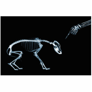 X-Ray Skeletons Blue Bad Dog Standing Photo Sculpture