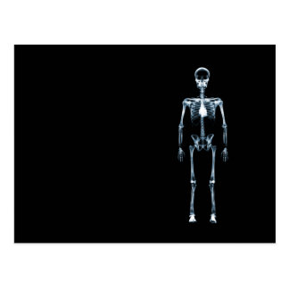 X-Ray Vision Blue Single Skeleton Postcard