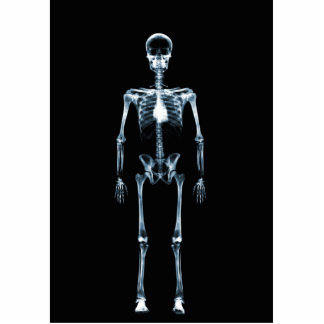 X-Ray Vision Blue Single Skeleton Standing Photo Sculpture